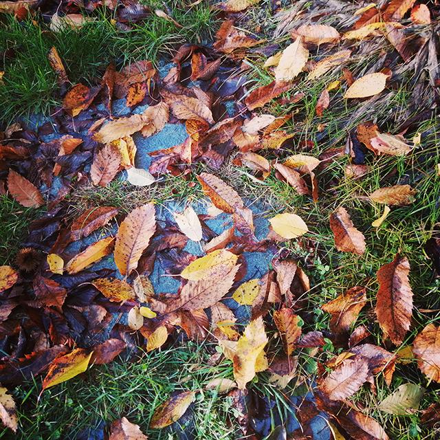 Foliage autunnale