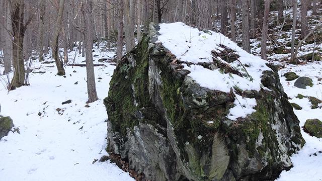 masso innevato nel bosco