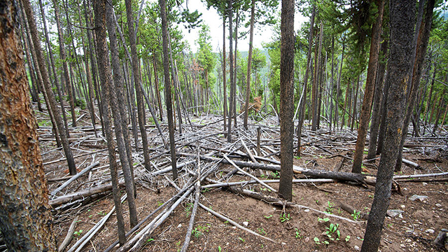 Come alberi caduti